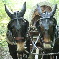 Western North Carolina Wagon Train
